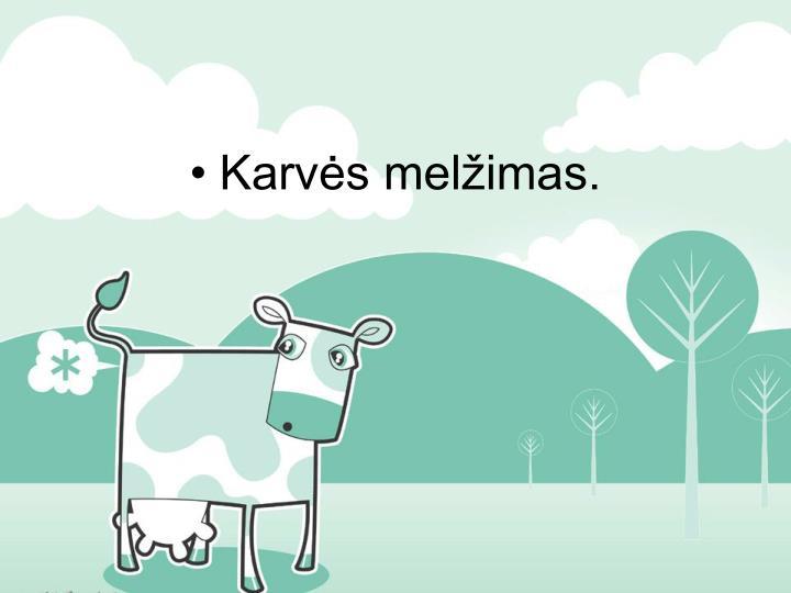Karvės melžimas.