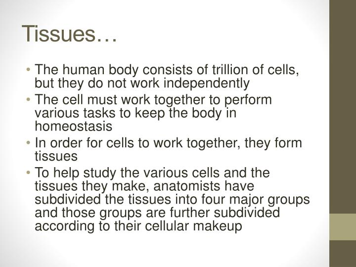tissues and membranes Connective tissue proper 1 cells fixed cells: 6/16/14 11:15 am tissues and membranes page 9 membranes epithelia and their underlying connective tissue form membranes that cover and protect.