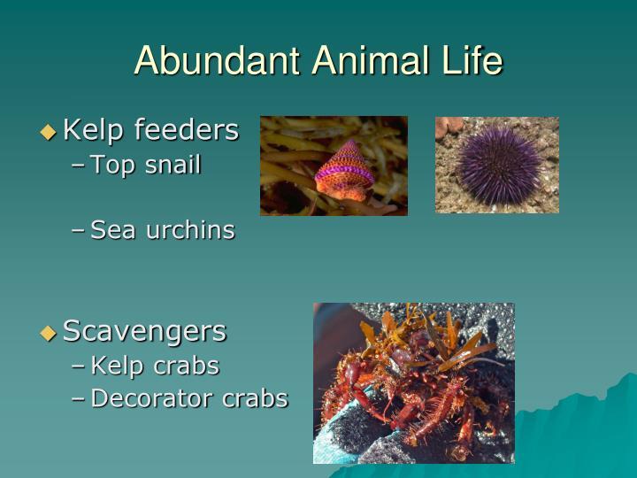 Abundant Animal Life