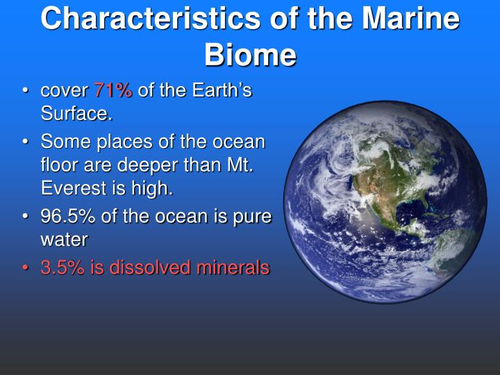 PPT - The Marine Biome PowerPoint Presentation - ID:5546786