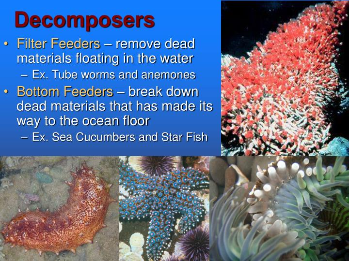 Ppt The Marine Biome Powerpoint Presentation Id 5546786