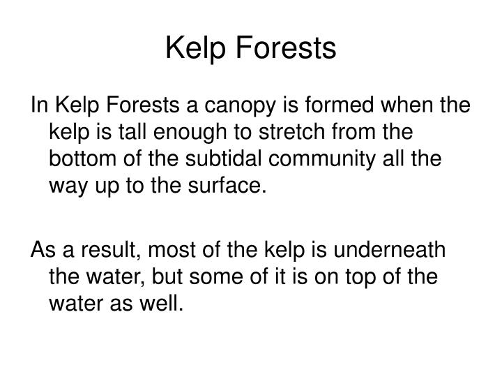 Kelp Forests