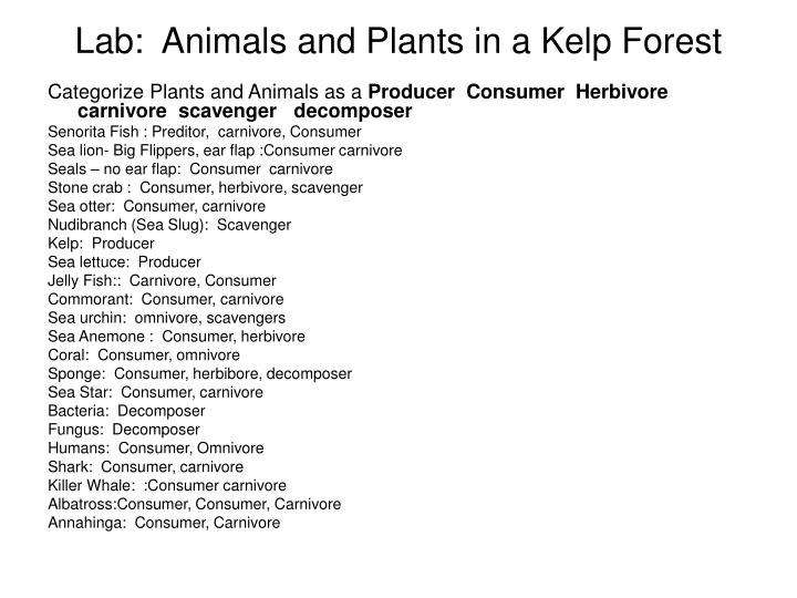 Lab:  Animals and Plants in a Kelp Forest