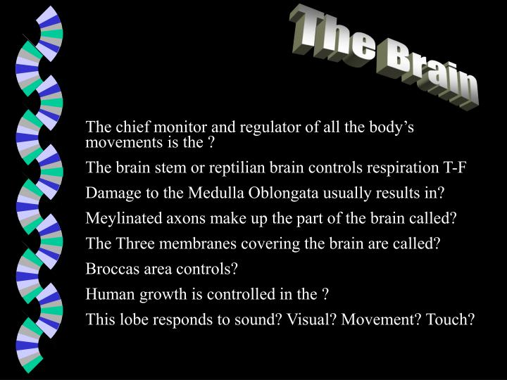 The chief monitor and regulator of all the body's movements is the ?