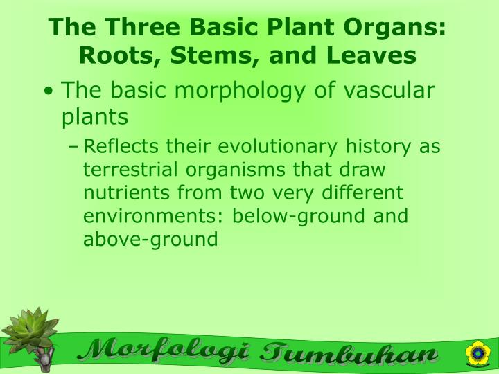 The three basic plant organs roots stems and leaves
