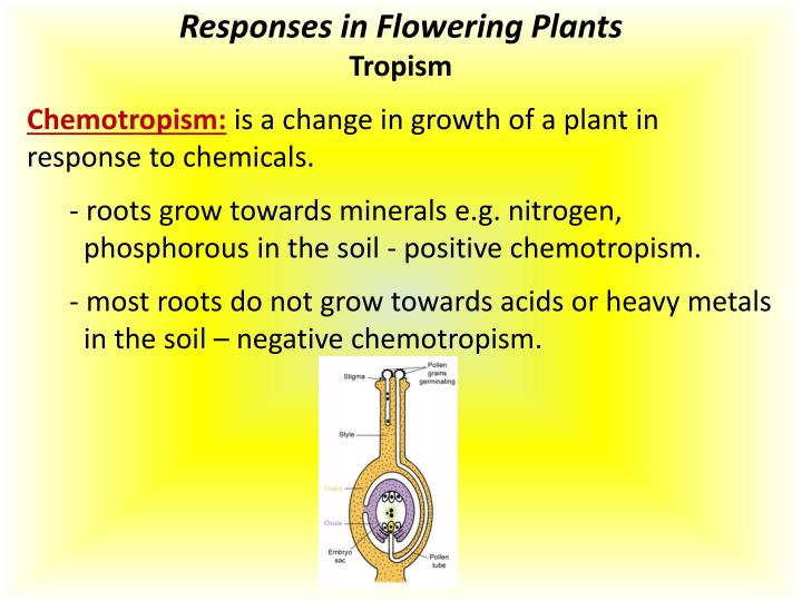Responses in Flowering Plants