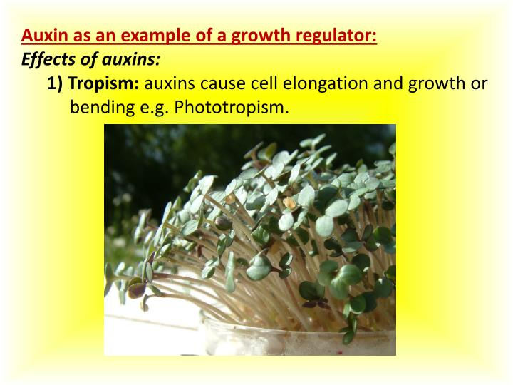 Auxin as an example of a growth regulator: