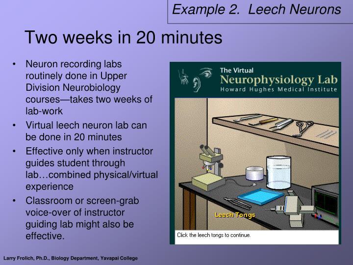 Example 2.  Leech Neurons