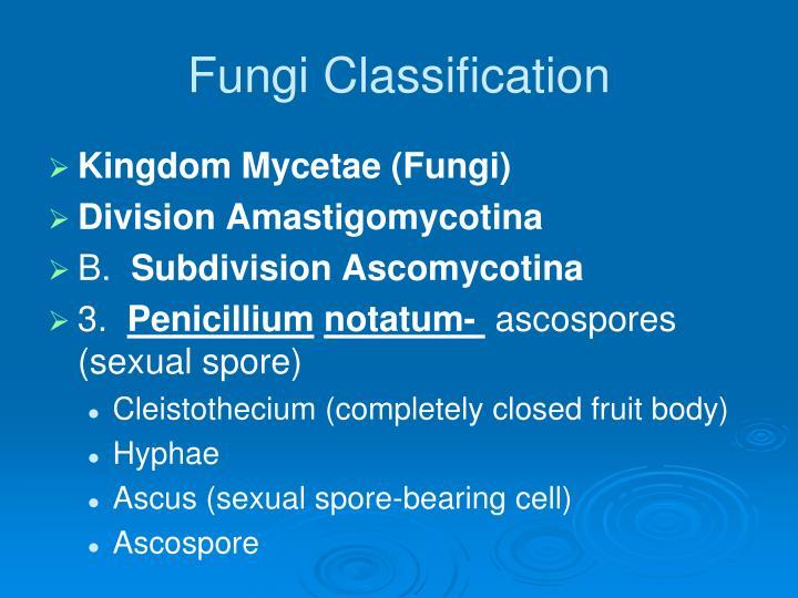 Fungi Classification