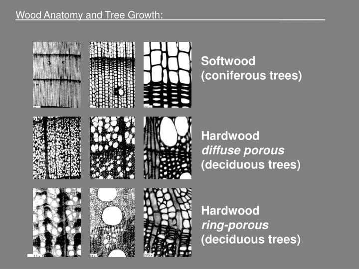 Wood Anatomy and Tree Growth:                                           ________