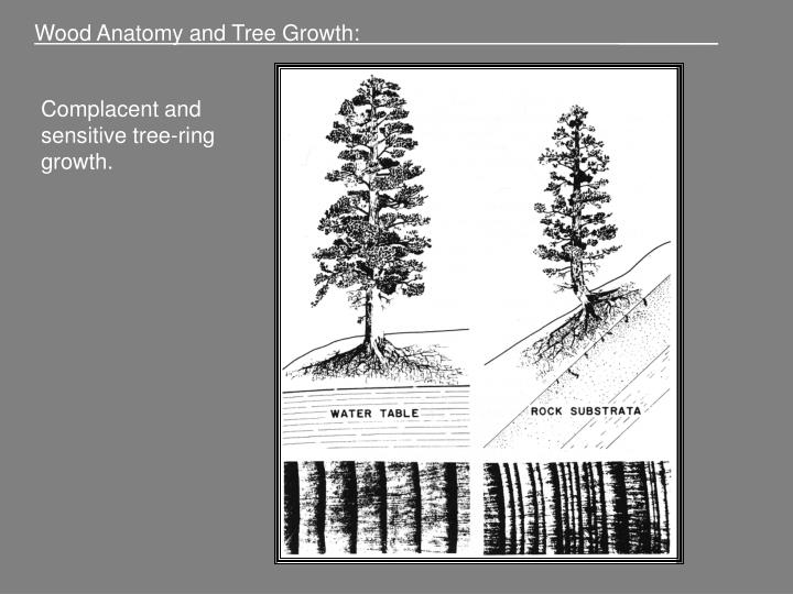 PPT - Wood Anatomy and Tree Growth: ______ PowerPoint Presentation ...