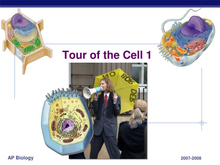 tour of the cell biology paper Tour of the cell objectives after lewis j, et al molecular biology of the cell 4th edition new york: garland science 2002 the mitochondrion available from.