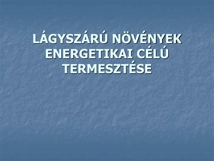 LÁGYSZÁRÚ NÖVÉNYEK ENERGETIKAI CÉLÚ TERMESZTÉSE