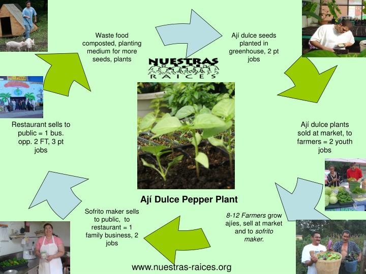 Waste food composted, planting medium for more seeds, plants