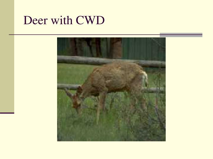 Deer with CWD