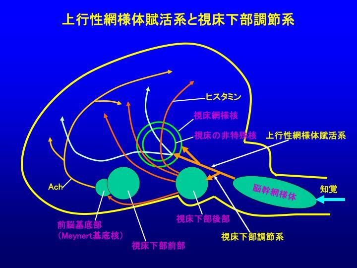 シャネル キャビアスキン 財布 コピー 5円 | ドルチェ&ガッバーナ 財布 激安コピー