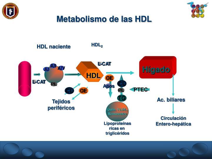 Metabolismo de las HDL