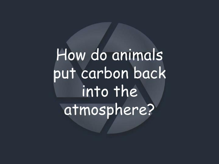 How do animals put carbon back into the atmosphere?