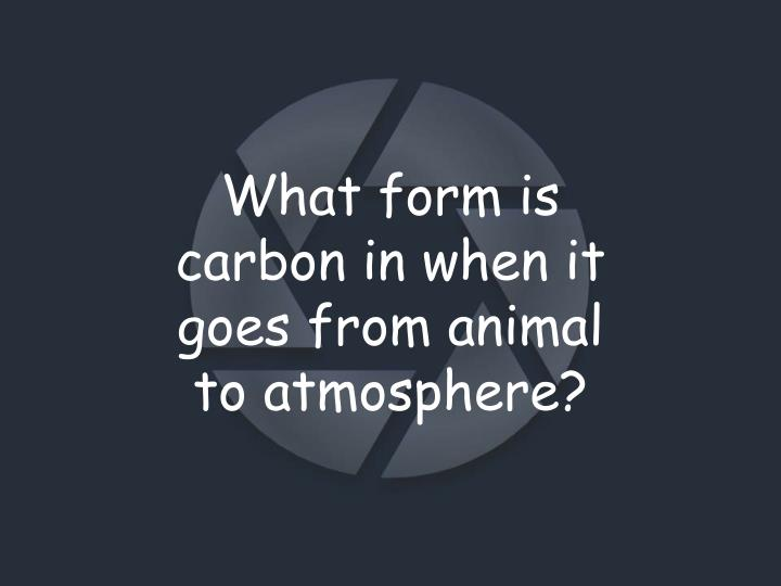 What form is carbon in when it goes from animal to atmosphere?
