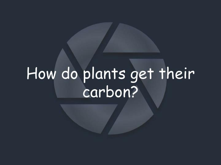 How do plants get their carbon?