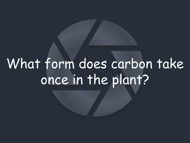 What form does carbon take once in the plant?