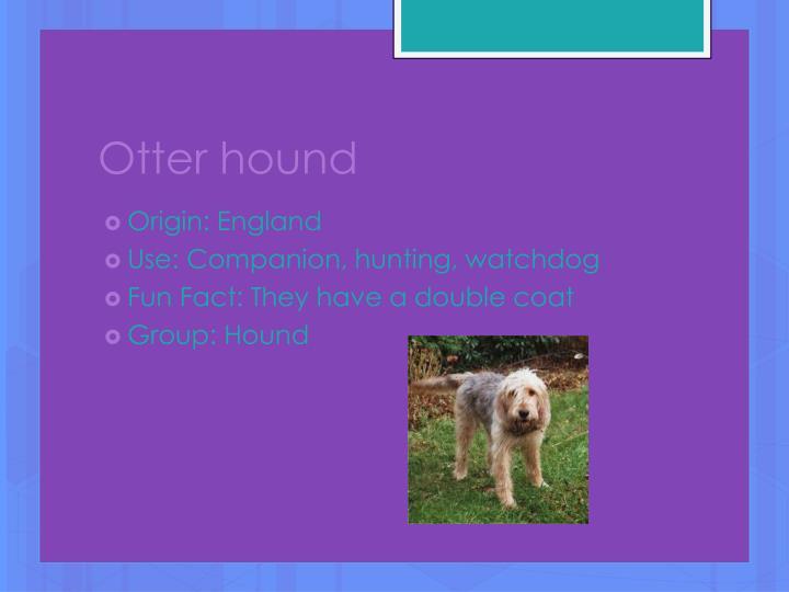 Otter hound