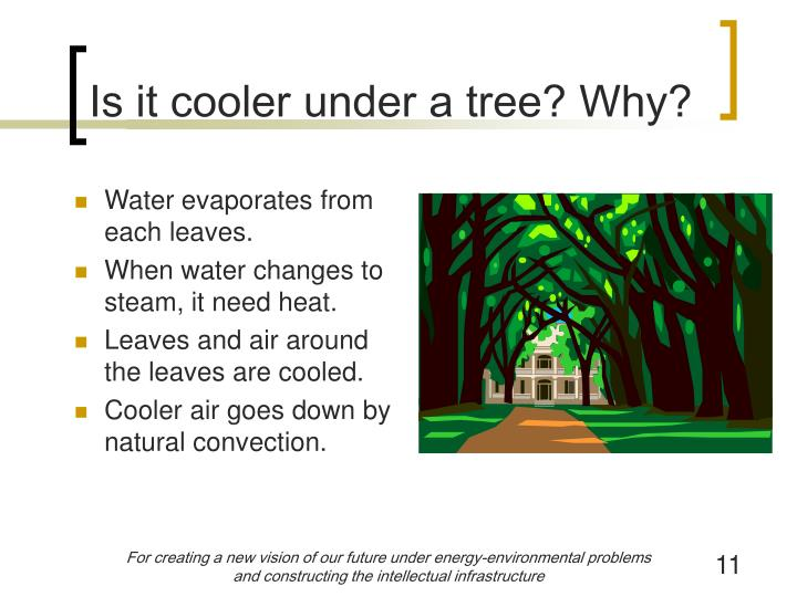 Is it cooler under a tree? Why?