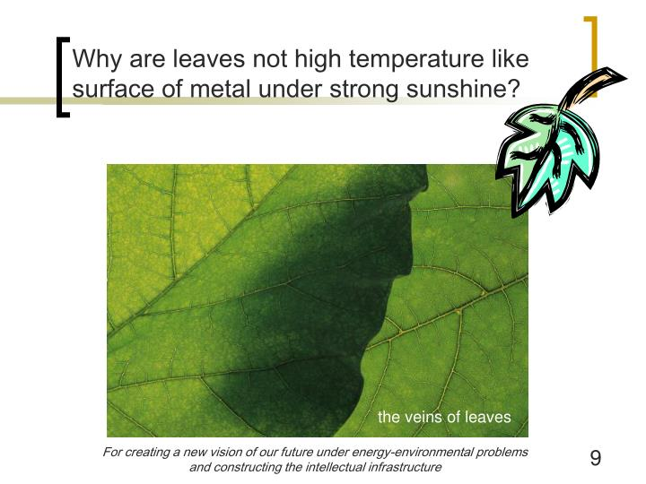 Why are leaves not high temperature like surface of metal under strong sunshine?