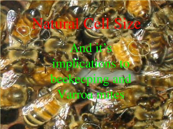 and it s implications to beekeeping and varroa mites n.