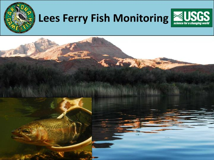 Lees ferry fish monitoring