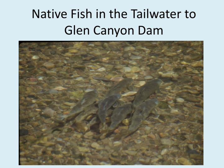 Native Fish in the