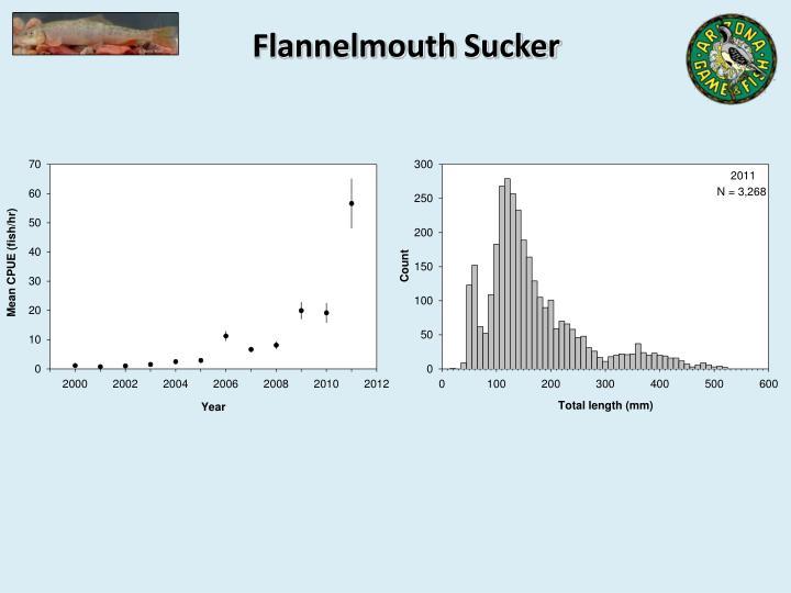 Flannelmouth