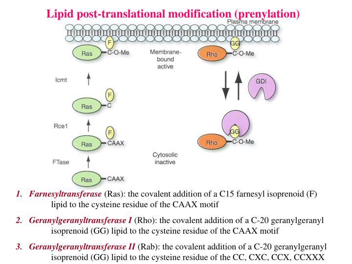 Lipid post-translational modification (prenylation)