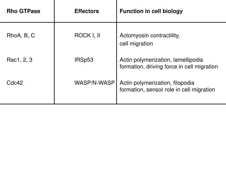Rho GTPaseEffectorsFunction in cell biology