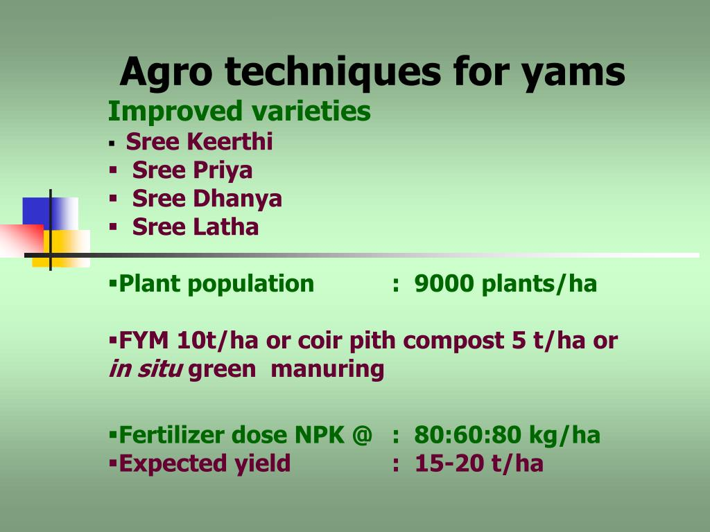 PPT - INTERCROPPING TUBER CROPS IN COCONUT GARDEN PowerPoint