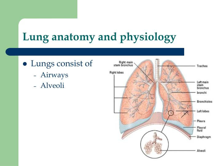 Ppt Respiratory Function Tests Powerpoint Presentation Id5576405