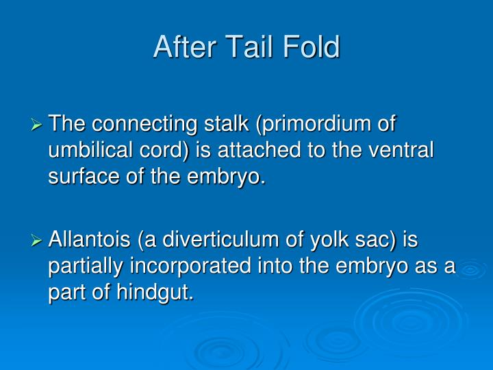 After Tail Fold