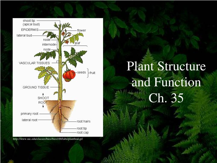 plant structure and function ch 35 n.