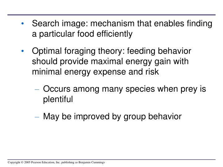 Search image: mechanism that enables finding a particular food efficiently