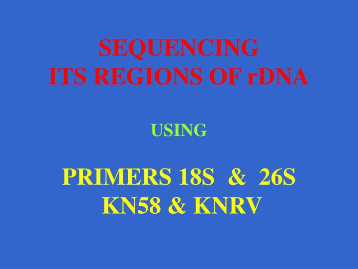 sequencing its regions of rdna using primers 18s 26s kn58 knrv n.
