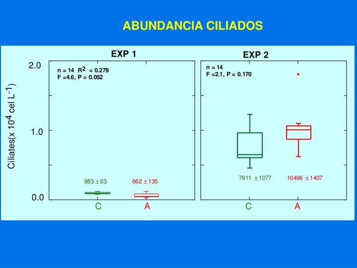 ABUNDANCIA CILIADOS