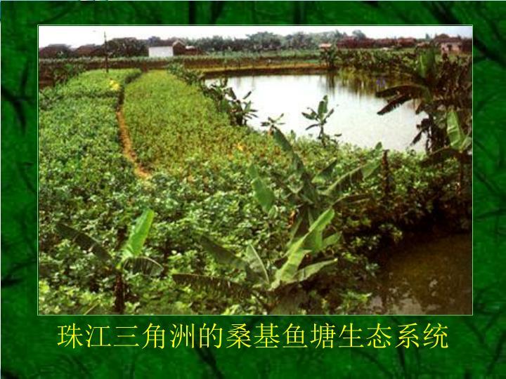 珠江三角洲的桑基鱼塘生态系统