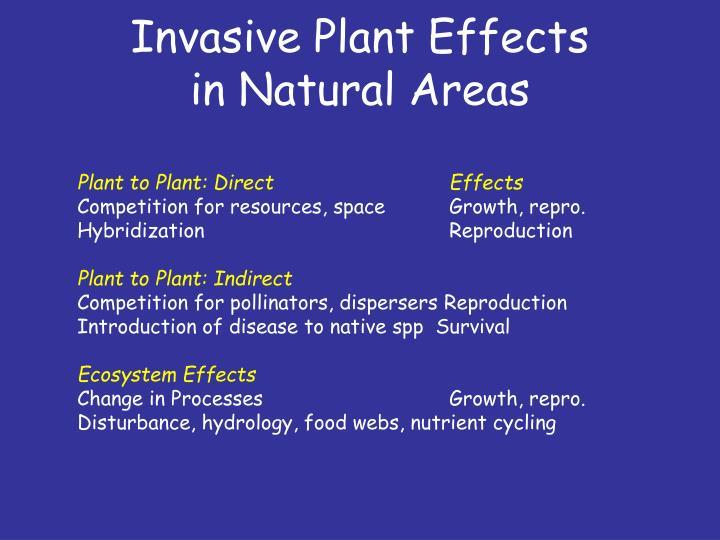 Invasive Plant Effects