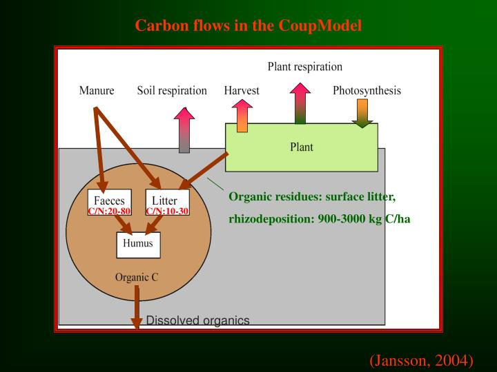 Carbon flows in the CoupModel