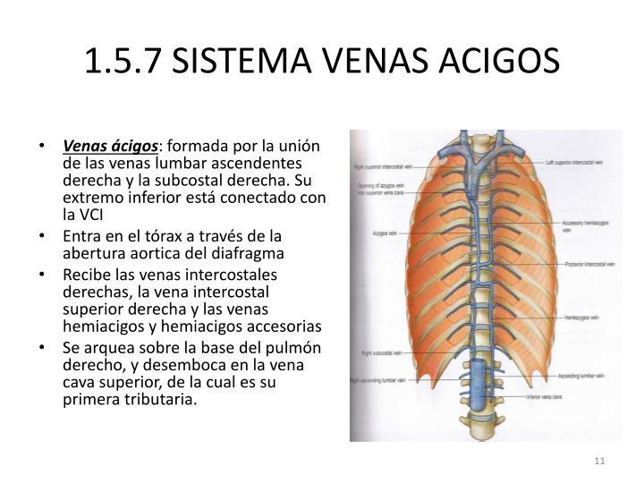 PPT - 1.5.3 Grandes vasos sanguíneos PowerPoint Presentation - ID ...