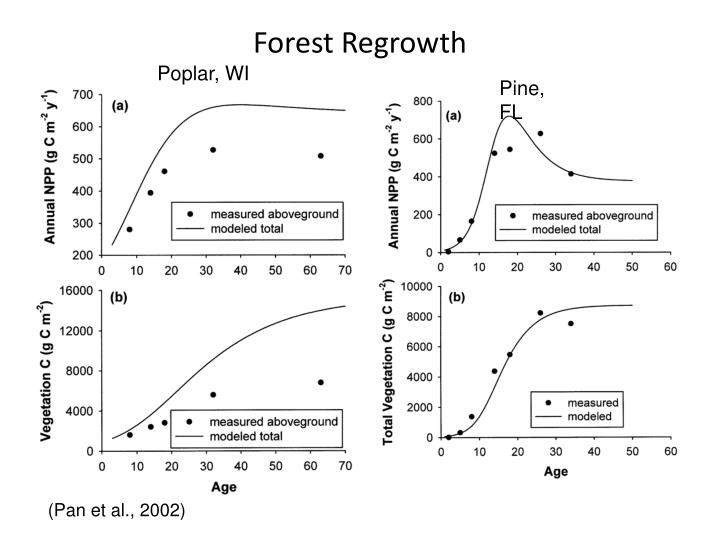 Forest Regrowth