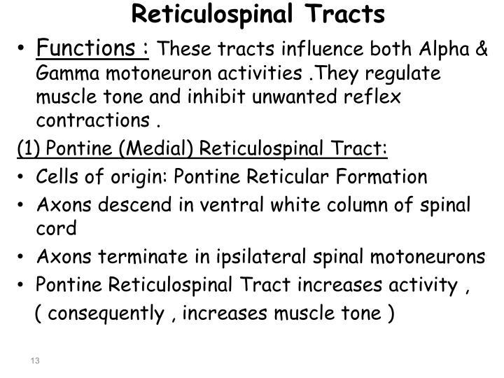 Reticulospinal