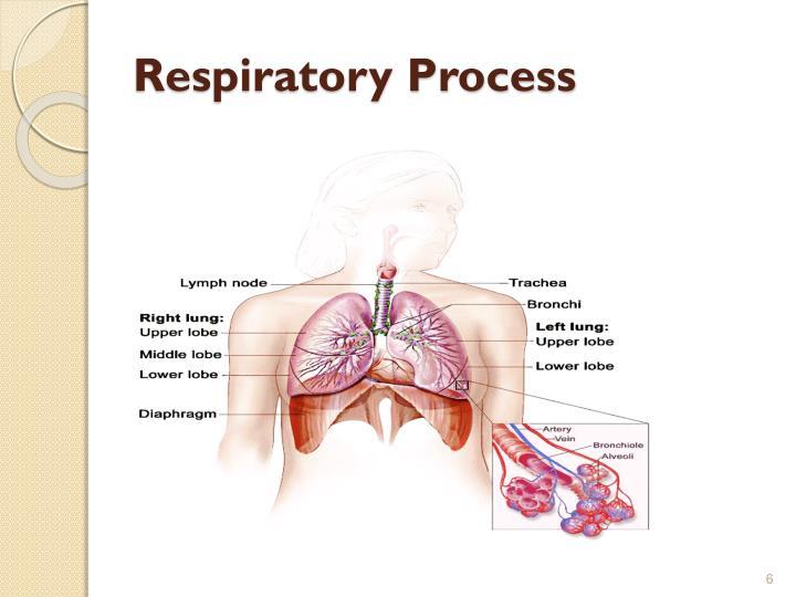 Respiratory Process