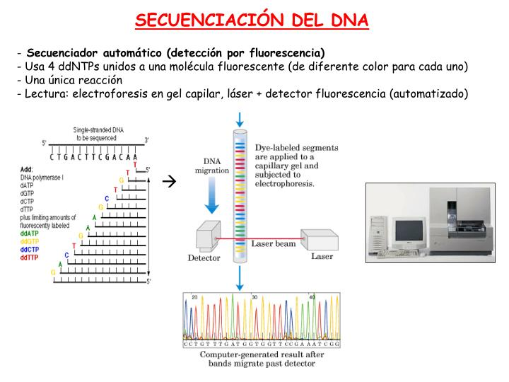 SECUENCIACIÓN DEL DNA
