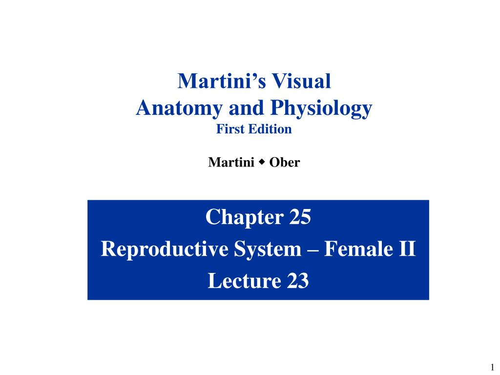 PPT - Chapter 25 Reproductive System – Female II Lecture 23 ...